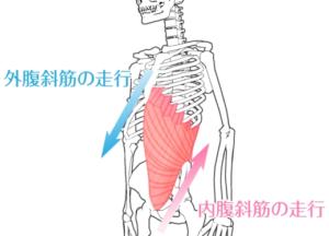 ウエストをくびれさせるためにはどこの筋肉を鍛えればよいの?