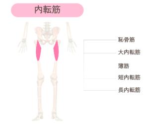 鍛えて美脚になれる筋肉③ 太ももの内転筋