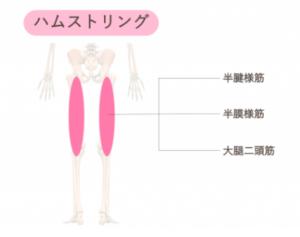 鍛えて美脚になれる筋肉② 太もものハムストリング