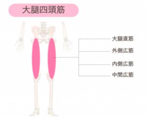 鍛えて美脚になれる筋肉① 太ももの大腿四頭筋