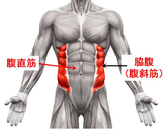 腹直筋と腹斜筋の位置