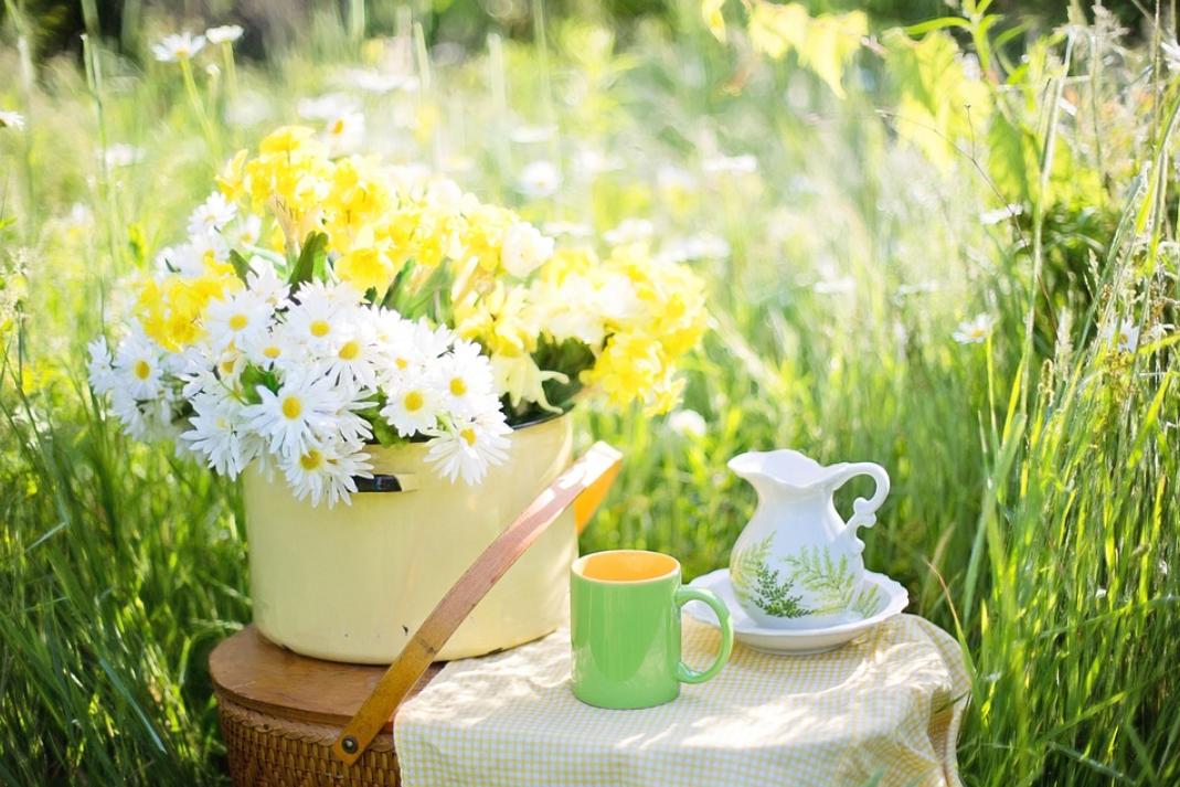 緑茶コーヒーダイエットの方法とは?効果や口コミ、飲み方も解説!